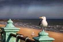 Standing Sea Gull At Brighton Sea Front