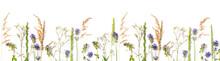 Various Wild Meadow Flowers An...