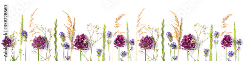 Fototapeta Various wild meadow flowers and herbs on a white background top view, flat lay, banner. Border of bright fragrant meadow herbs and flowers. obraz