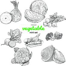 Natural Vegetable Mini Set. Vi...