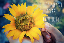Inspirational Motivational Quote - If It Is Mean To Be, It Will Be.  With Beautiful Sunflower Blossom In Hands.