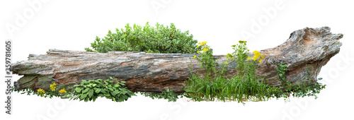 Dead tree fallen and lying on the ground. Cutout tree trunk surrounded by flowers. Garden design isolated on white background. Flowering shrub and green plants for landscaping. Flowerbed.