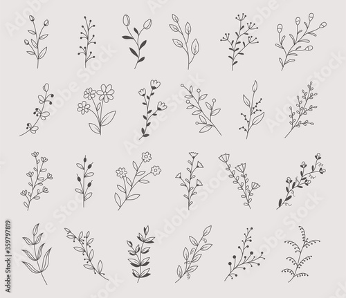 Obraz Set of hand drawn flowers, branches and leaves, vector illustration - fototapety do salonu