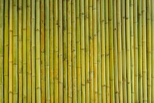 Yellow-Green Bamboo Fence Back...
