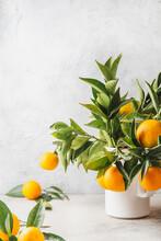 Orange Tree Branches Bouquet W...