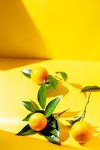Fresh Orange Fruits With Orange Tree Leaves On Yellow Background. Sunlight Effect