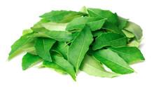 Fresh Curry Leaves (Murraya Koenigii) Isolated On White Background