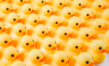 A Lot Of Rubber Ducks Standing In A Order
