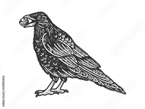 Obraz na płótnie crow with a nut in its beak sketch engraving vector illustration