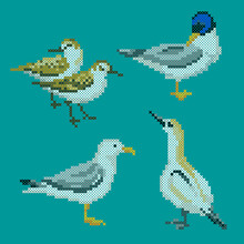 Illustration Of Cross Stitch Sea Birds