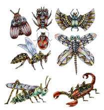 Set Of Insects Drawn In The St...