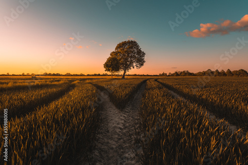 Obraz na plátně Weggabelung an einem Baum
