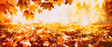 Beautiful Autumn Nature Backgr...
