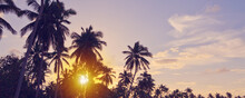 Tropical Sunset With Coconut P...