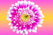 Closeup Of A Beautiful Pink An...