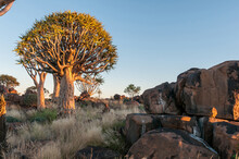 Sunrise With Rock Hyrax At Qui...