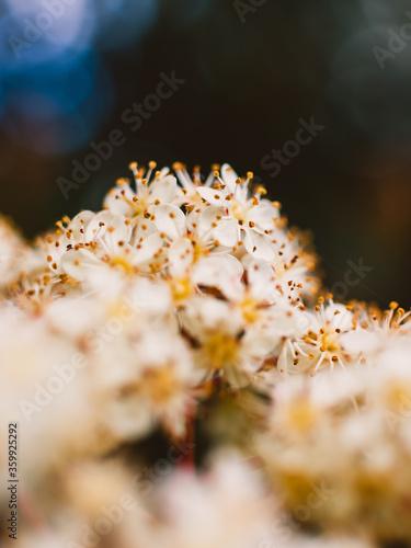 Fototapety, obrazy: close up of white flower