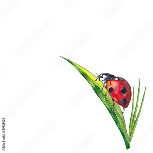Cuadros en Lienzo Sticker design of summer lawn plants with insect