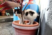 UN Gato Blanco Con Tonos Negros