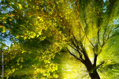 Valokuva Majestic rays of light dramatically illuminating the branches and foliage of a t