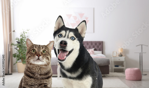 Cute cat and dog in room. Pet friendly hotel