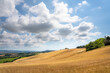 Marche Region, cultivated hills in summer, meadow, wheat and green fields. Italy