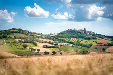 Marche Region, Cultivated Hill...