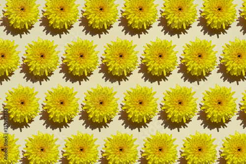Pattern of rows of yellow flower heads - 359967838