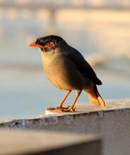 Bird Standing On The Wall, Myn...