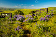 A Fence, Gate And Trailand Bal...