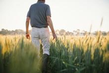 Farmer Checking Broadacre Cere...