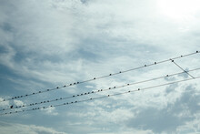 Birds On A Wire Against Cloudy...