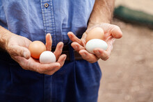 Farmer Holding Eggs In His Hands