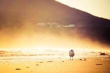 Seagull On Hazy Beach Morning