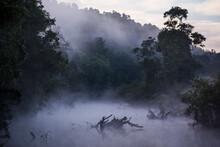 Early Morning Fog Rises Throug...