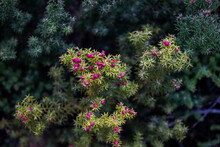 Closeup Of Plants With Small R...