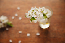 Blossom From A Plum Tree In A ...