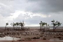 A Few Trees Standing In Empty Wetlands