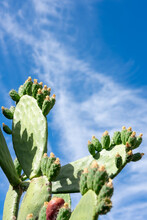 A Blooming Cactus Against Blue Sky