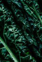 Macro Shot Of Kale