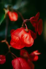 Ladybug On Red Flower