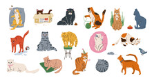 Cat Pets Vector Illustration S...