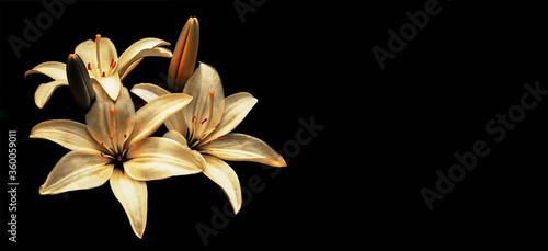 Condolence card with yellow lilies isolated on black background Fototapet