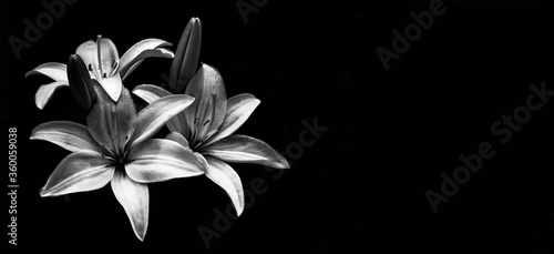 Fotomural Sympathy card with lilies isolated on black background