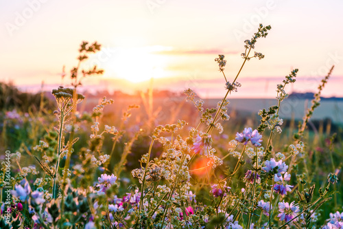 Beautiful wildflowers on a green meadow. Warm summer evening