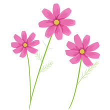 Illustration Of Pink Cosmos Fl...