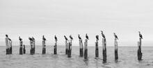Cormorants Cape Cod 4