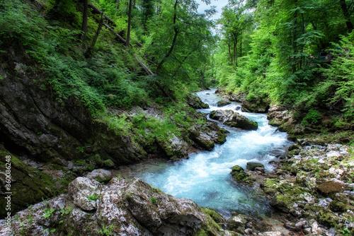 Naklejka premium Piękna przyroda doliny Vintgar, Słowenia