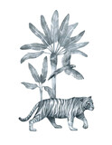 Watercolor palm tree, tiger, parrot in black and white color. Gently silver compositions with wildlife jungle elements, banana tree, wild cat. Aesthetic vintage poster, card, cover. - 360112697