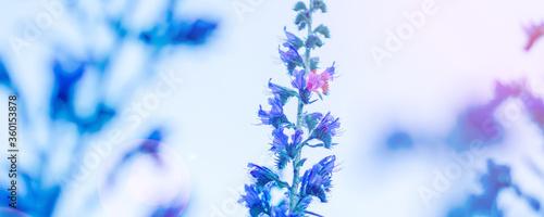 Fotografia blue meadow flower blossoming on sky background